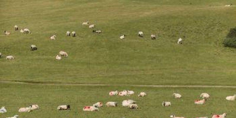 Public Consultation Process on the Curragh Plains